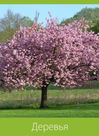 Деревья (семена)