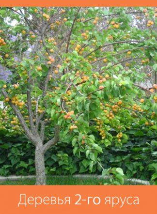 Деревья 2-го яруса: до 15-20 м