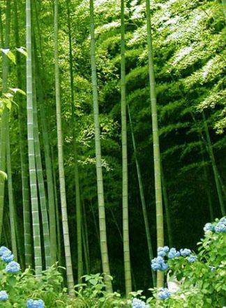 Бамбук Моко