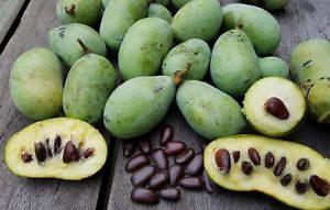 Азимина, банановое дерево