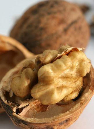 Juglans regia, Грецкий орех, сорт Песчанский