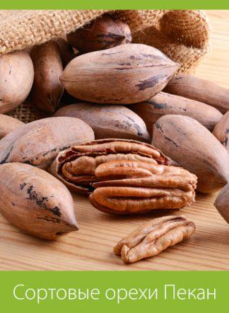 Сортовые орехи Пекан