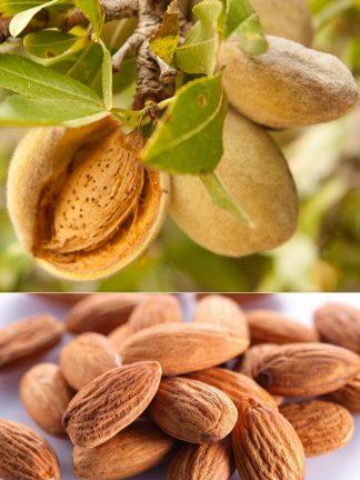 Миндаль сладкий, almond
