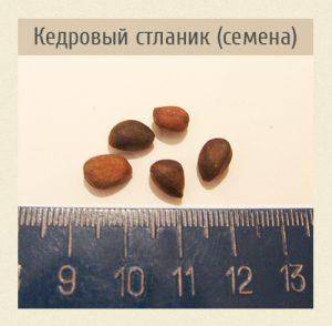 Кедровый стланик, семена