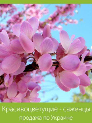 Красивоцветущие - саженцы