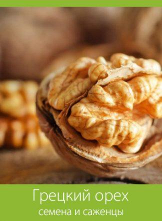 Грецкий орех (семена и саженцы)