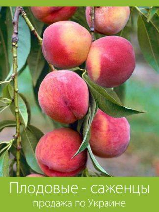 Плодовые - саженцы
