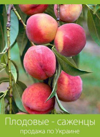 Плодовые - саженцы (продажа по Украине)