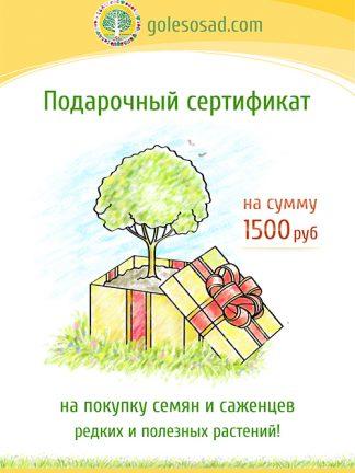 Подарочный сертификат, gift Certificate