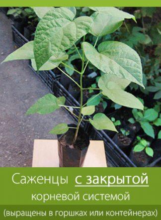 Саженцы с закрытой корневой системой (выращены в контейнерах или горшках) продажа по Украине