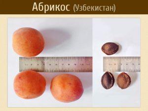 Абрикос крупный, вкусный, семена