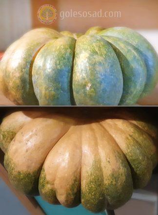 Тыква Moschata Squash семена