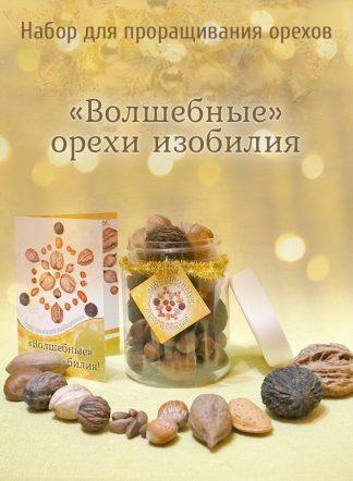Подарочный набор орехов для выращивания