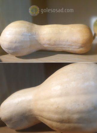 Тыква бутылочная, семена