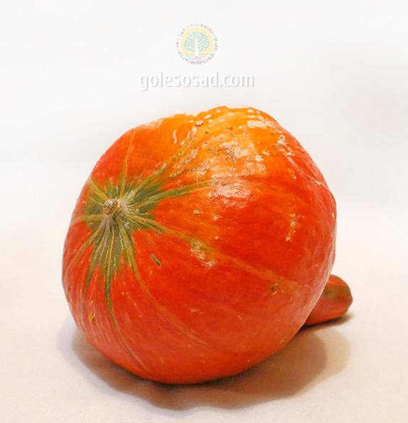 Тыква сортовая малая, семена, pumpkin