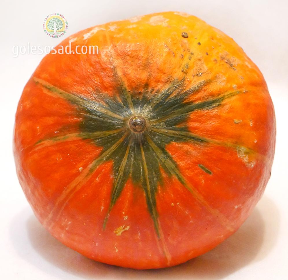 Тыква, семена, pumpkin