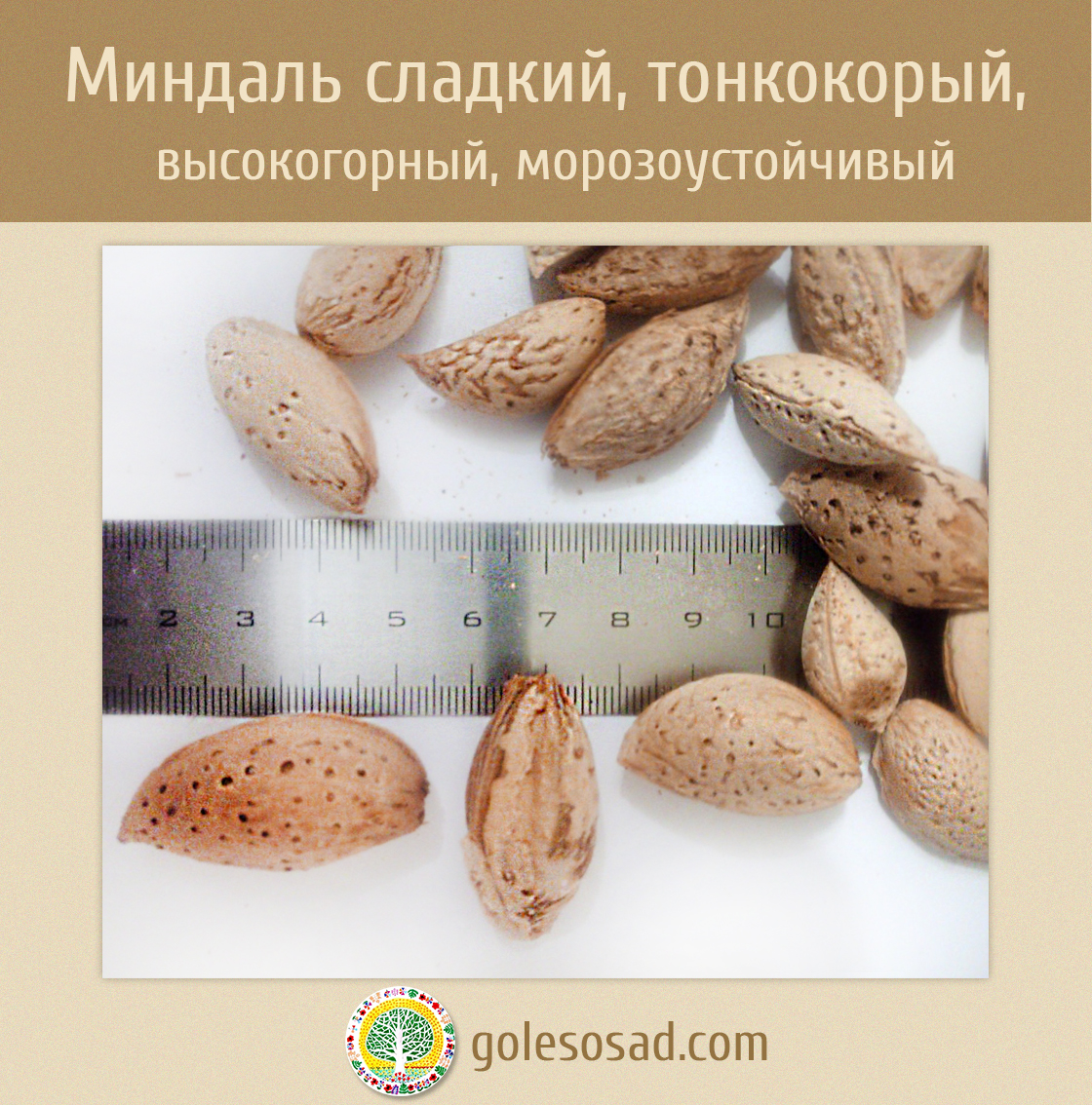 Миндаль морозоустойчивый, тонкокорый, сладкий, семена,