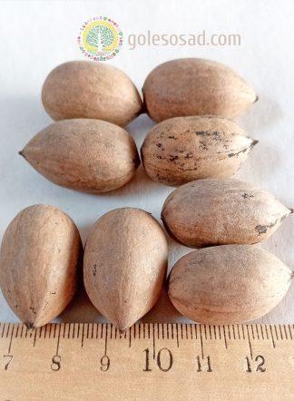 Орех Пекан Азербайджан, семена, pecan