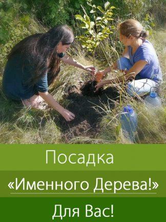 """Посадка """"Именного Дерева"""" для Вас!"""