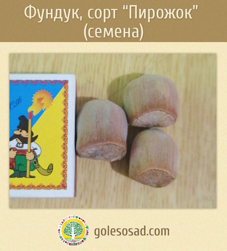Фундук, сорт Пирожок, семена