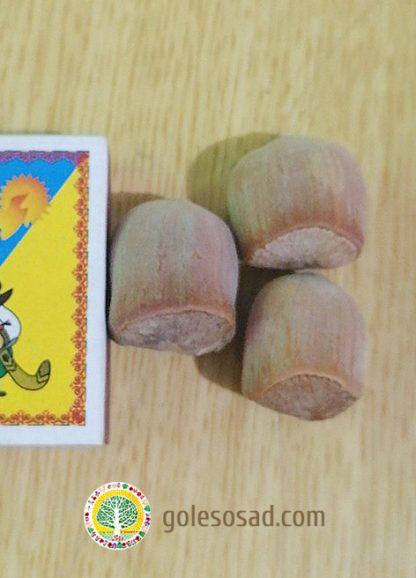 Фундук, сорт Пирожок, купить семена