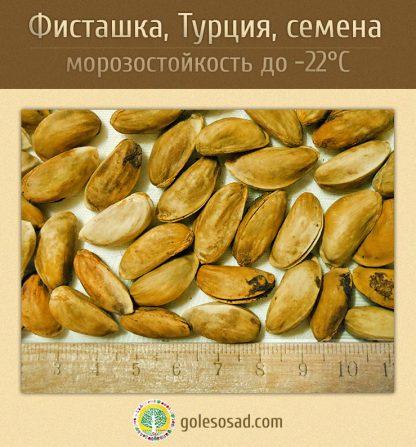 pistachios, фисташка, купить семена